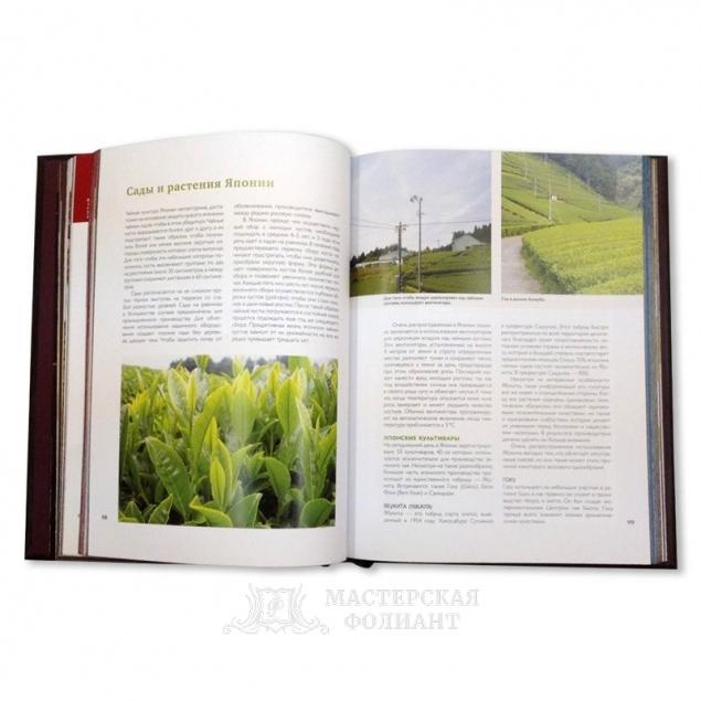 Большая книга чая в кожаном переплете ручной работы. Качественные цветные иллюстрации